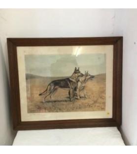 """Lithographie """"Chiens de chasse"""" d'après Léon Danchin"""